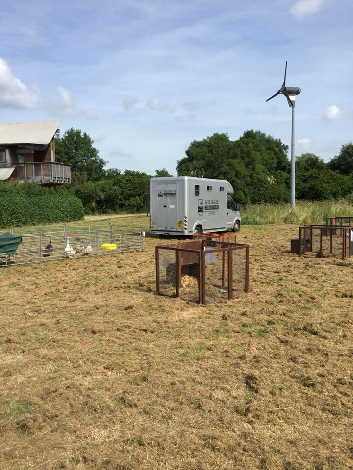 Horse box and visit pens with a wind turbine